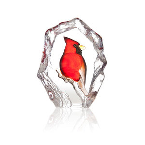 Wildlife Cardinal