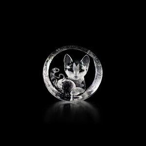 Wildlife Kitten