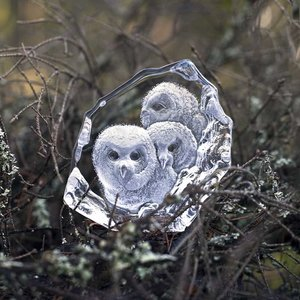 Wildlife Owlets