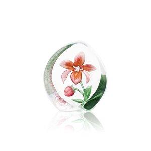 Floral Fantasy Orchid