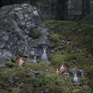 Wildlife Owl