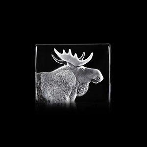 Wildlife Moose