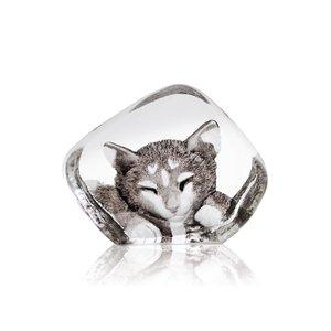Wildlife Katt (miniatyr)
