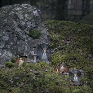 Wildlife Uggla (miniatyr)