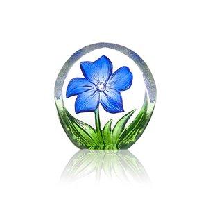 Floral Fantasy Anemone