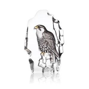 Wildlife Falcon
