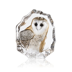 Wildlife Barn Owl